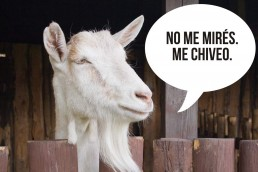 What does chivearse mean in Guatemalan Spanish?