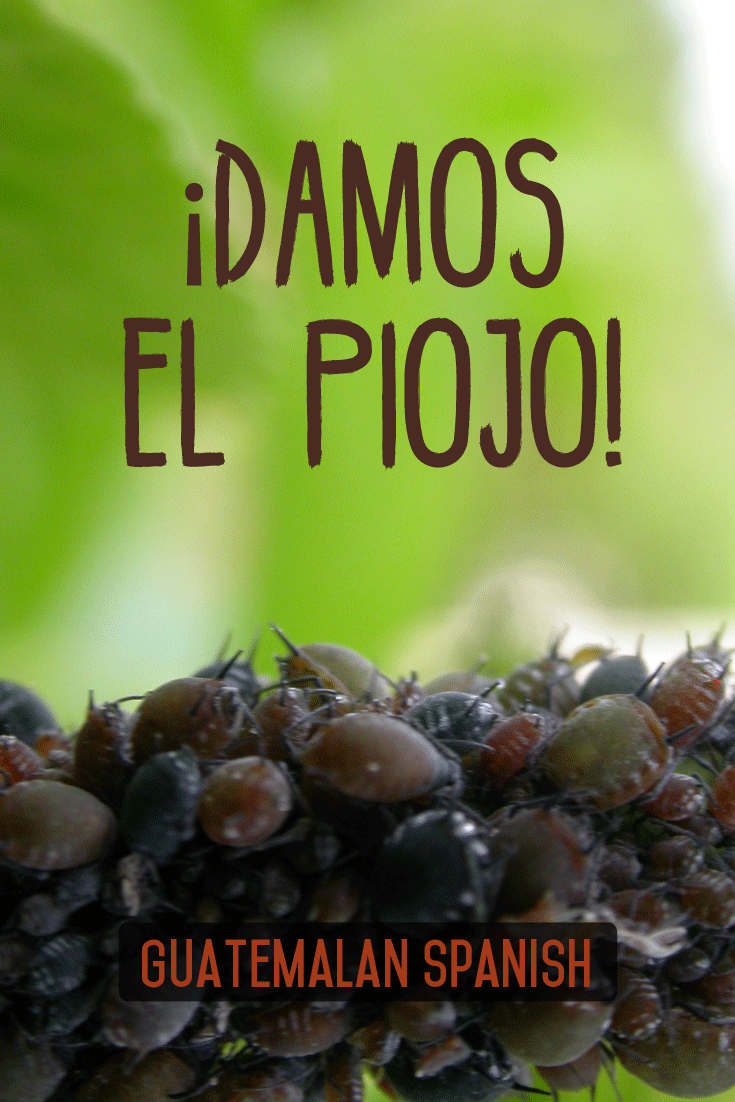Guatemalan sayings: ¡Damos el piojo!